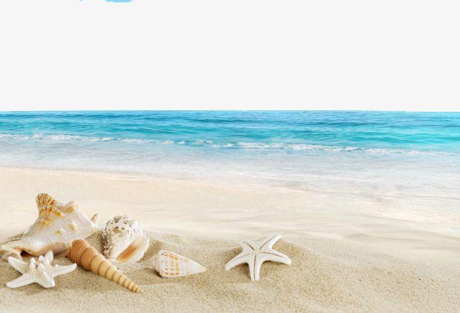 White sandy beach clipart svg Beach And The Sea, Sea Clipart, Sandy Beach, Starfish PNG ... svg