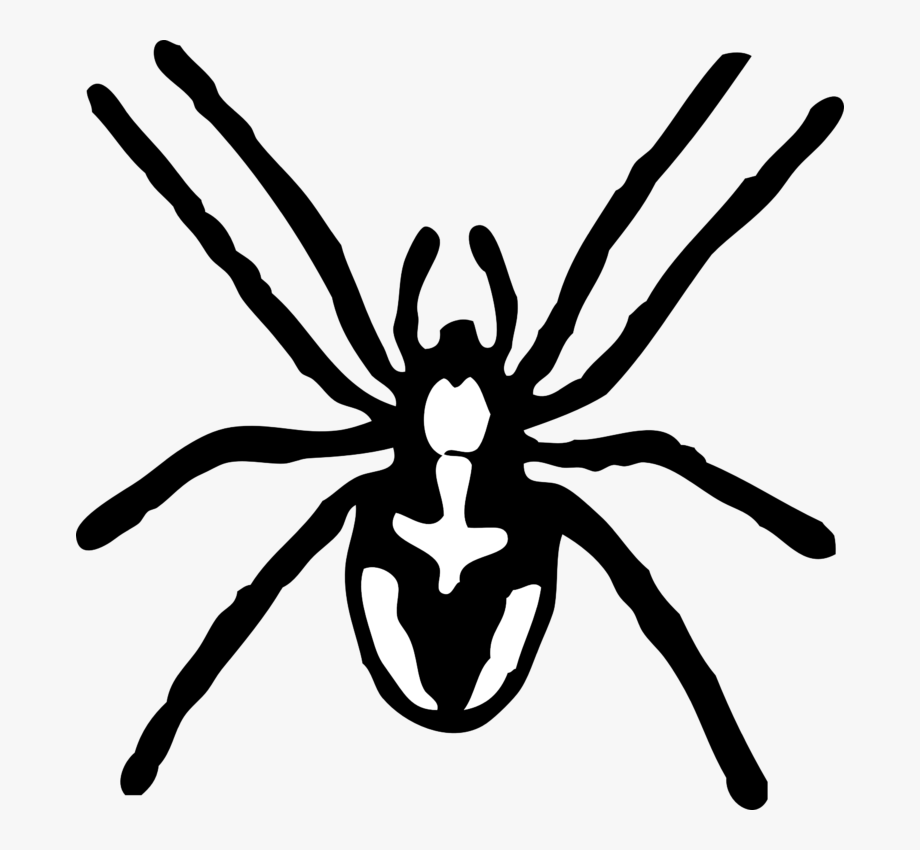 White spider clipart