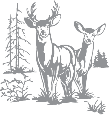 White tailed deer etching clipart transparent library Glass etching stencil of Doe and Buck Deer with Trees. In ... transparent library