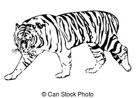 White tiger laying down clipart image library library Tiger Clipart and Stock Illustrations. 30,876 Tiger vector ... image library library