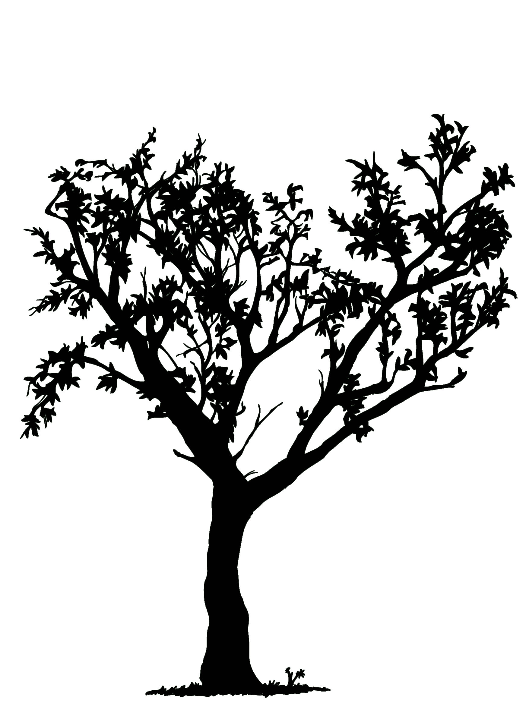 White tree black background clipart clip royalty free library Free Black And White Tree Drawing, Download Free Clip Art ... clip royalty free library