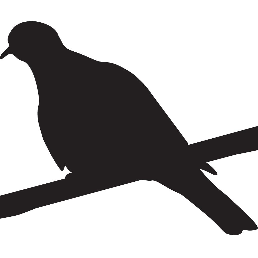 White winged dove clipart black and white clip art free White-winged Dove | Celebrate Urban Birds clip art free