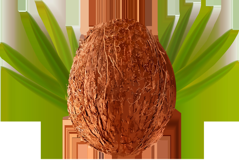 Whole coconut clipart jpg transparent stock Coconut clipart whole, Coconut whole Transparent FREE for ... jpg transparent stock