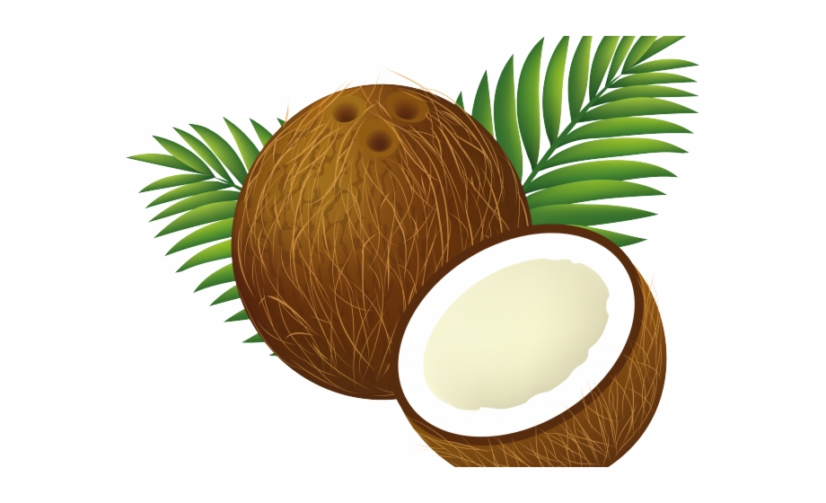 Whole coconut clipart jpg freeuse library Coconut Clipart Luau - Coconut Drawing, Transparent Png ... jpg freeuse library