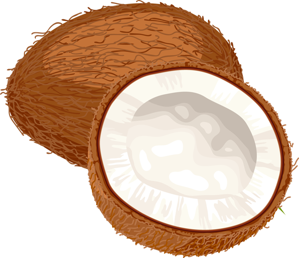 Whole coconut clipart cute jpg black and white stock Coconut clipart whole, Coconut whole Transparent FREE for ... jpg black and white stock