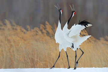 Whooping crane clipart black and white vector scene png Crane Bird photos, royalty-free images, graphics, vectors ... png