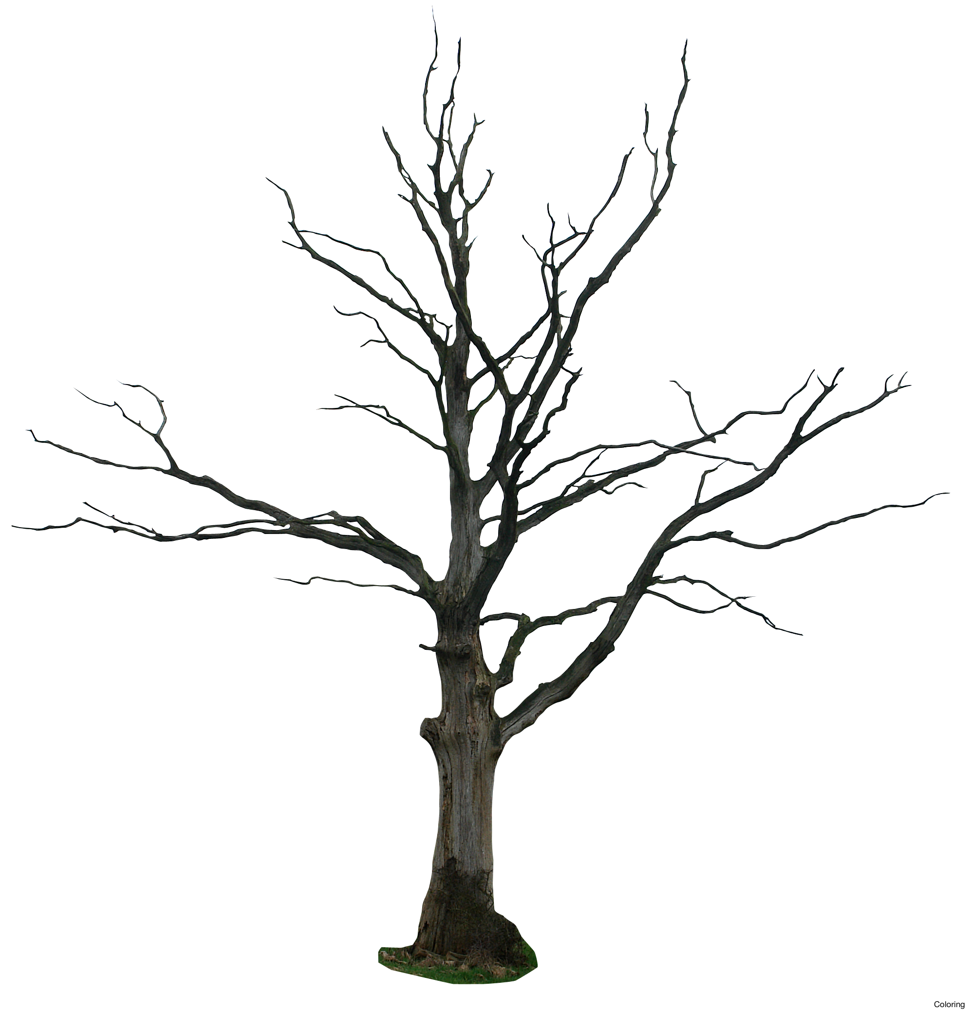 Wicked dead tree clipart graphic black and white Wicked Tree Drawings | Free download best Wicked Tree ... graphic black and white