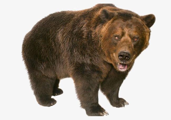 Wild bear clipart jpg transparent stock Bears clipart wild, Bears wild Transparent FREE for download ... jpg transparent stock