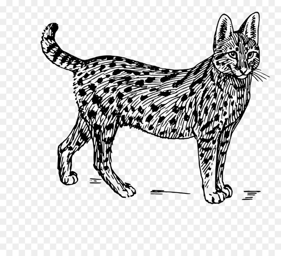 Wild cat animal clipart clip transparent download Black Line Background png download - 1000*910 - Free ... clip transparent download