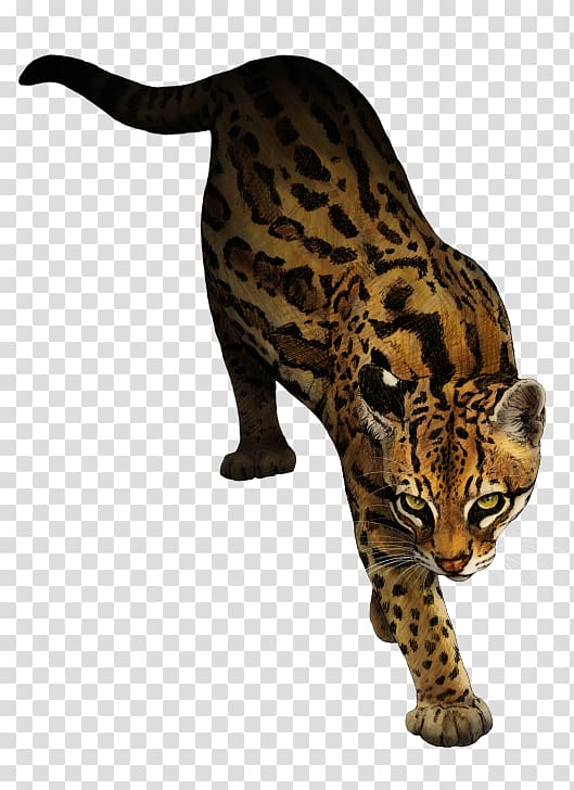 Wild cat animal clipart clip freeuse Ocelot Marbled cat Animal Rottweiler, mew transparent ... clip freeuse