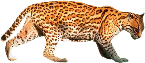 Wild cat animal clipart clipart library download Free Cat Animations - Cat Clipart - Animals clipart library download