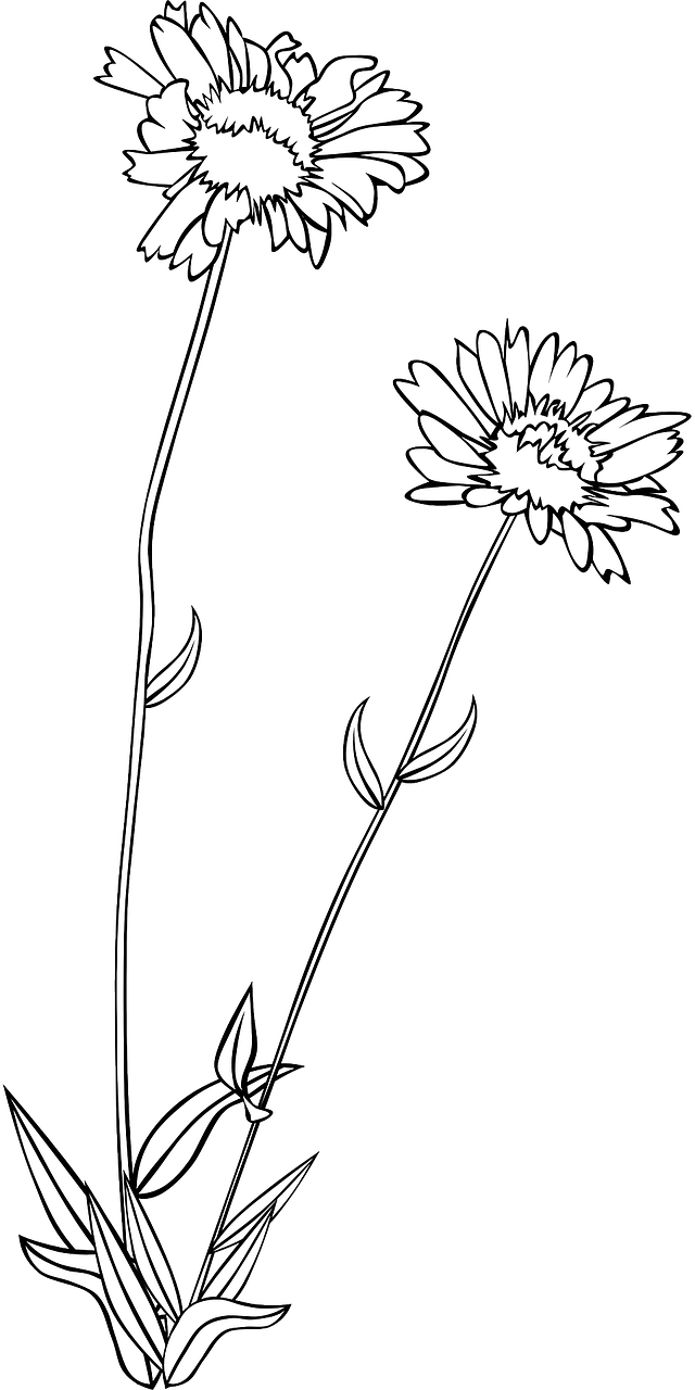 Wild flower clipart black and white clip art stock Wildflower Flower Plant Flora PNG Image - Picpng clip art stock