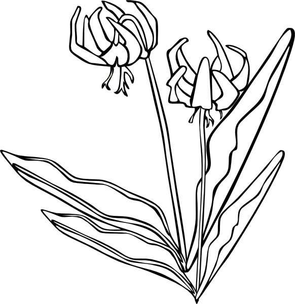 Wild flower clipart black and white royalty free download Wild Flower Clip Art at Clker.com - vector clip art online, royalty ... royalty free download