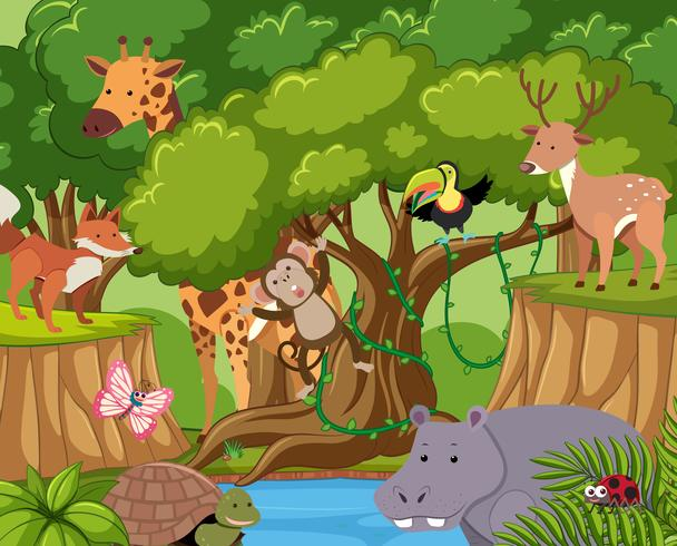 Wild forest clipart jpg transparent library Wild animals live in the forest - Download Free Vectors ... jpg transparent library