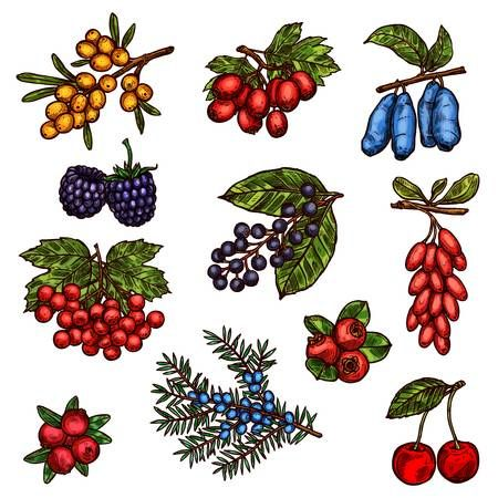 Wild forest clipart transparent download Stock Vector in 2019 | Нарисую | Fruit vector, Farm gardens ... transparent download