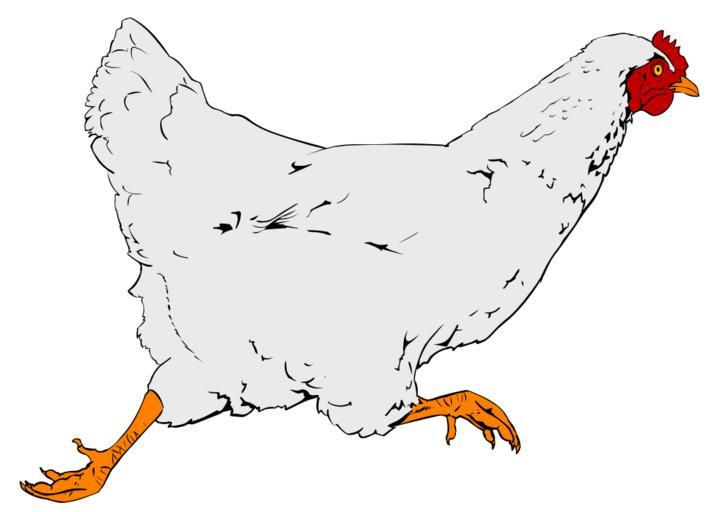Wild fowl head clipart clip art free library Free Images - SnappyGoat.com- bestof:clipart:rooster icon ... clip art free library