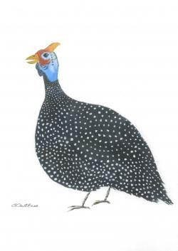 Wild fowl head clipart png Guinea clipart guinea fowl. Watercolour dots print ... png