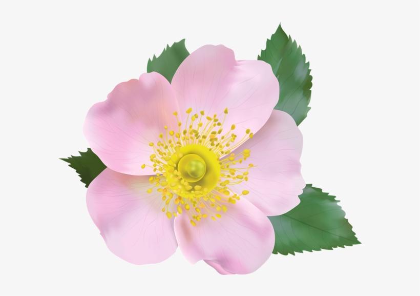 Wild rose clipart border svg royalty free stock Rose Blossom Png Transparent Clip Art Image - Wild Rose ... svg royalty free stock
