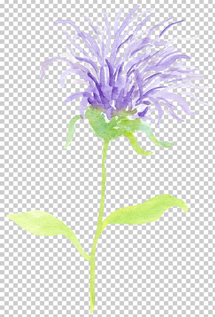 Wild thistle clipart svg freeuse Milk Thistle Book Outlander Car PNG, Clipart, Annual Plant ... svg freeuse