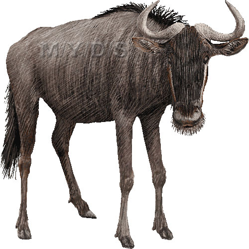 Wildabeast clipart png freeuse Blue Wildebeest (Connochaetes | Clipart Panda - Free Clipart ... png freeuse