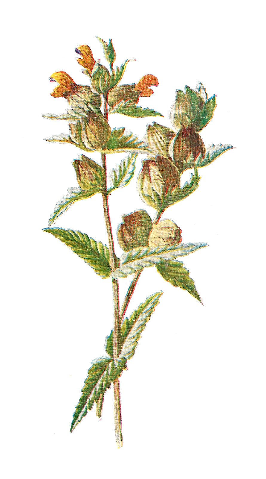 Wildflower background free clipart jpg library stock Free Wildflower Cliparts, Download Free Clip Art, Free Clip ... jpg library stock