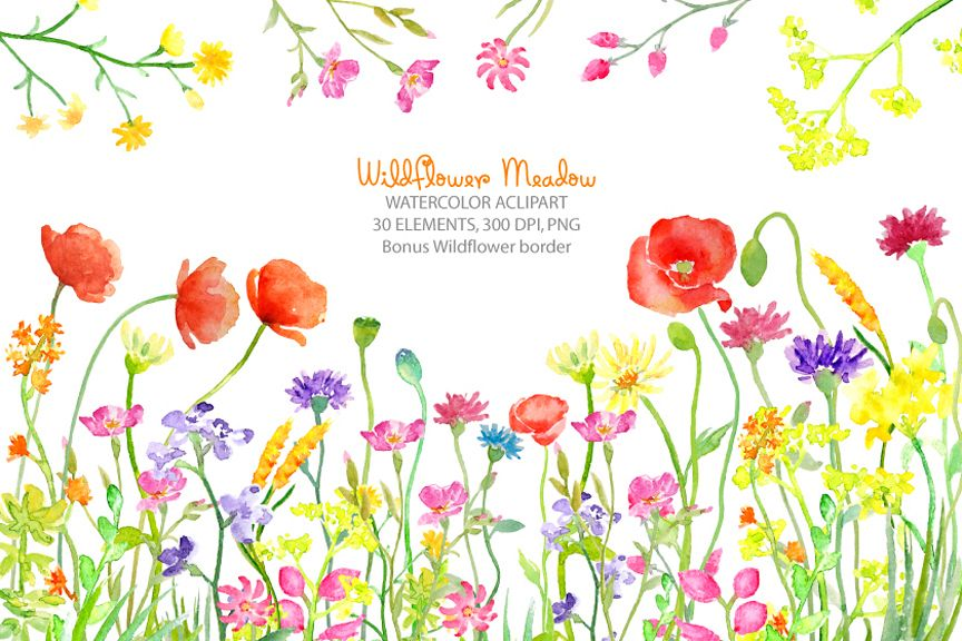 Wildflower clipart images graphic royalty free library Watercolor clipart wildflower meadow, wild flower border for instant  download graphic royalty free library