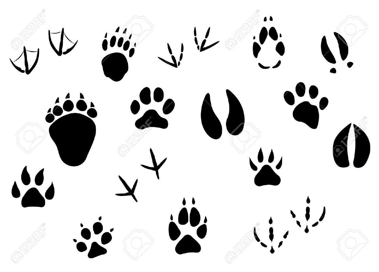 Wildlife tracks clipart clipart freeuse wildlife clipart - Google Search | Cakes for Clients ... clipart freeuse