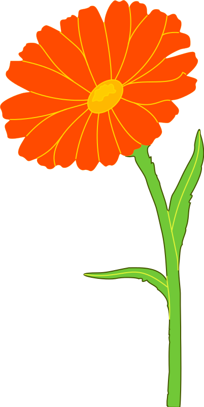 Wilted flower clipart picture download 28+ Collection of Genda Flower Clipart | High quality, free cliparts ... picture download