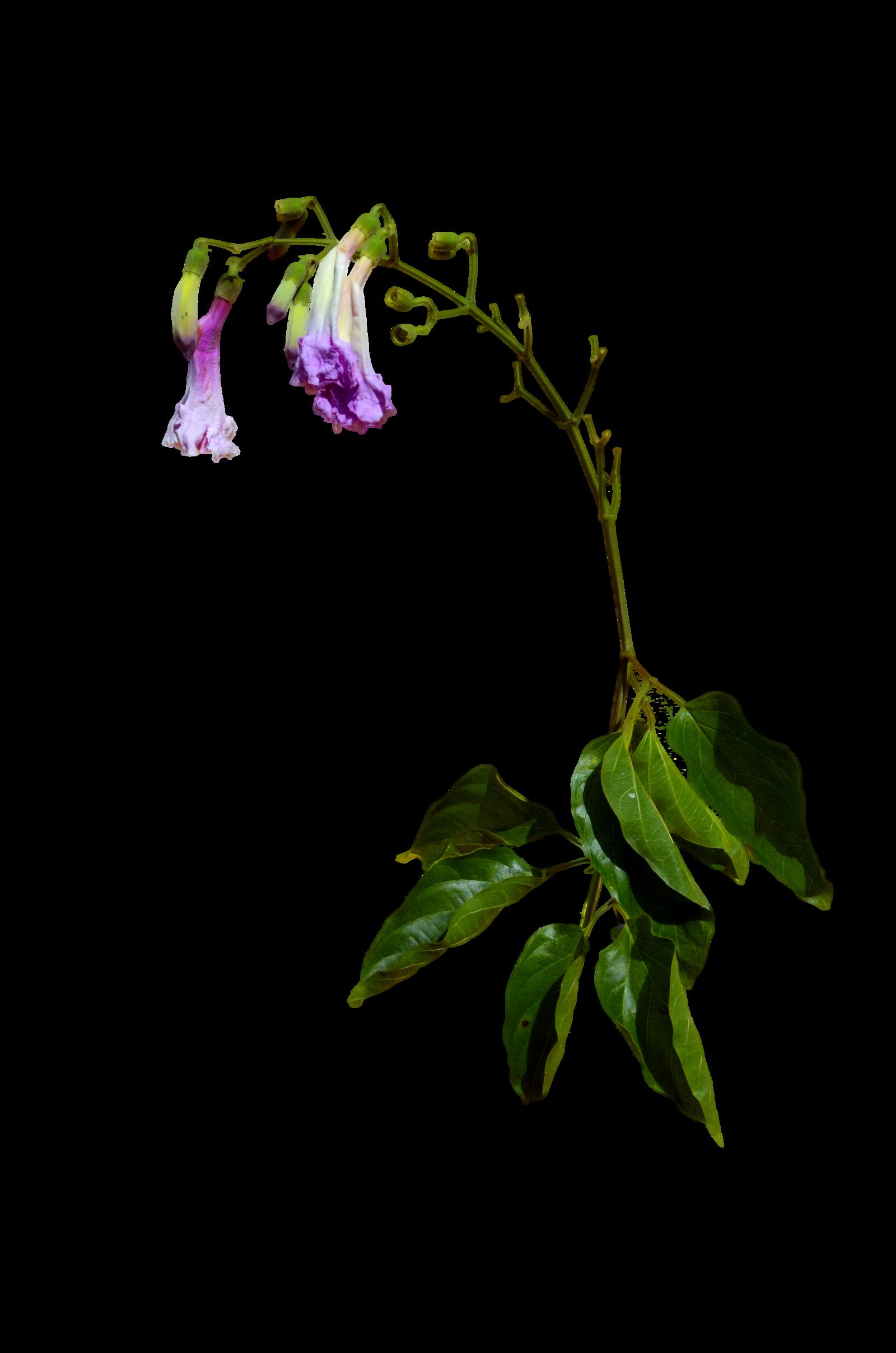 Wilted flower clipart transparent Flower Clip art - flower clipart 1600*2416 transprent Png Free ... transparent