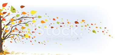 Wind leaves clipart clip black and white stock Fall Tree With It\'s Multi Colored Leaves Blowing IN The Wind ... clip black and white stock