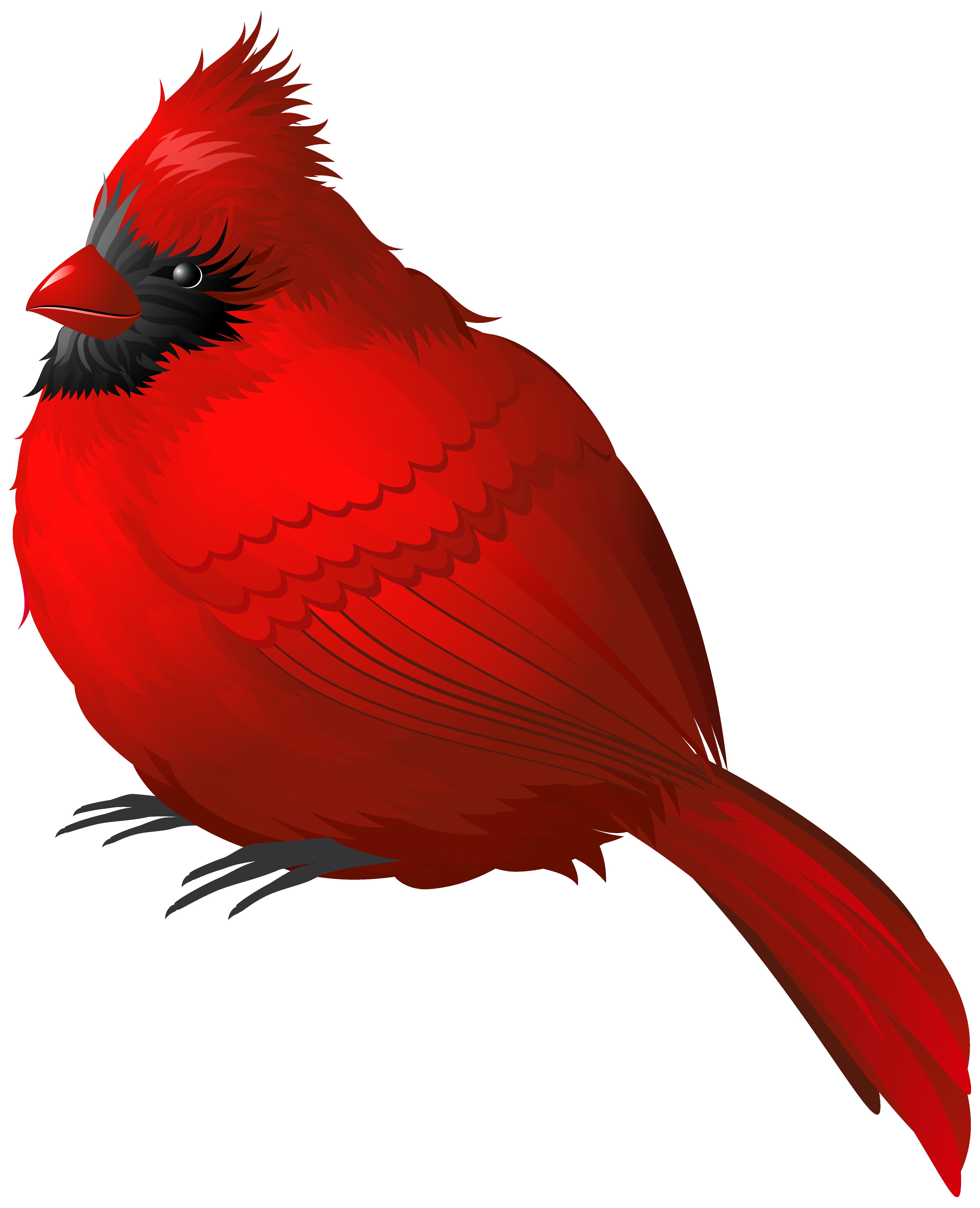 Winter birds clipart