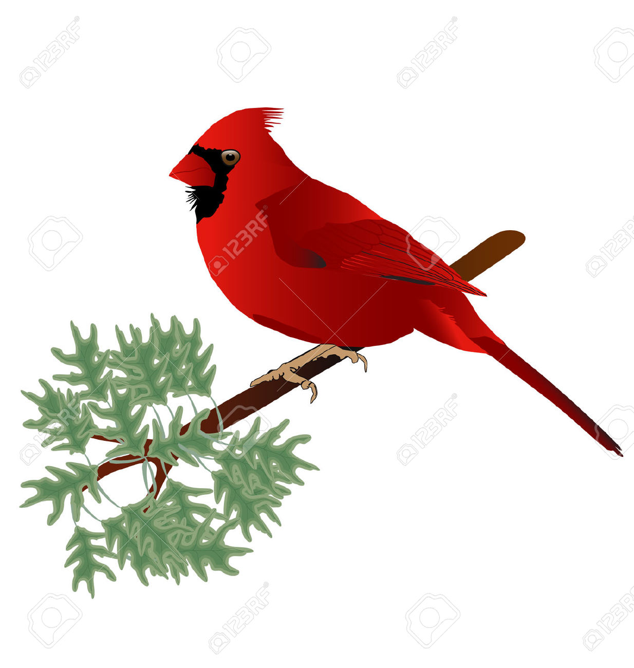 Winter clipart cardinal clipart royalty free library Winter Cardinal Clipart | Free download best Winter Cardinal ... clipart royalty free library
