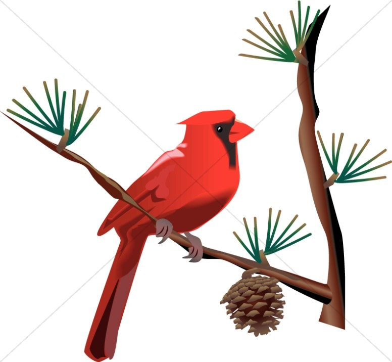 Winter clipart cardinal banner transparent download Red Cardinal on Branch | Wildlife Clipart banner transparent download