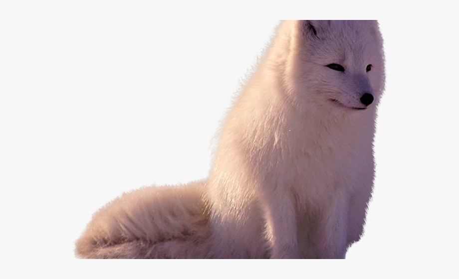Winter fox in snow clipart image royalty free download Arctic Fox Clipart Transparent - Arctic Fox #371777 - Free ... image royalty free download