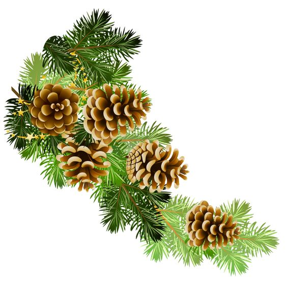 Winter greeny branches clipart clipart royalty free stock Free Winter Greenery Cliparts, Download Free Clip Art, Free ... clipart royalty free stock