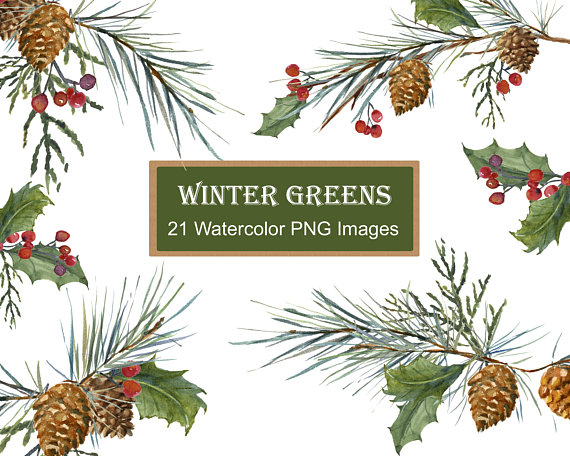 Watercolor pine cones clipart image royalty free stock Winter Greenery Clip Art, Pine Clipart, Christmas Greens ... image royalty free stock