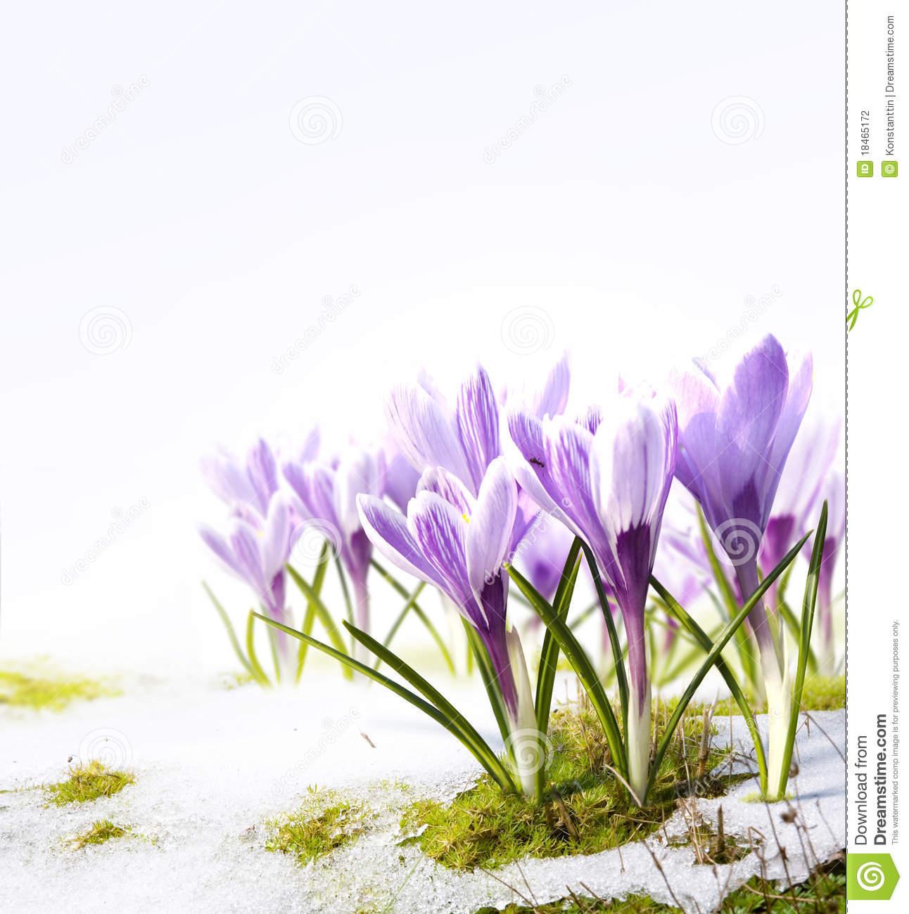 Winter melting into spring clipart vector black and white Spring clip art snow - 15 clip arts for free download on EEN vector black and white