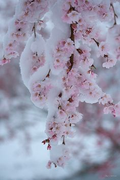 Winter melting into spring clipart jpg library 32 Best Spring Snow images in 2016 | Spring, Winter time ... jpg library
