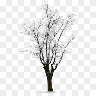 Winter tree canopy clipart picture transparent Winter Tree PNG Images, Free Transparent Image Download - Pngix picture transparent
