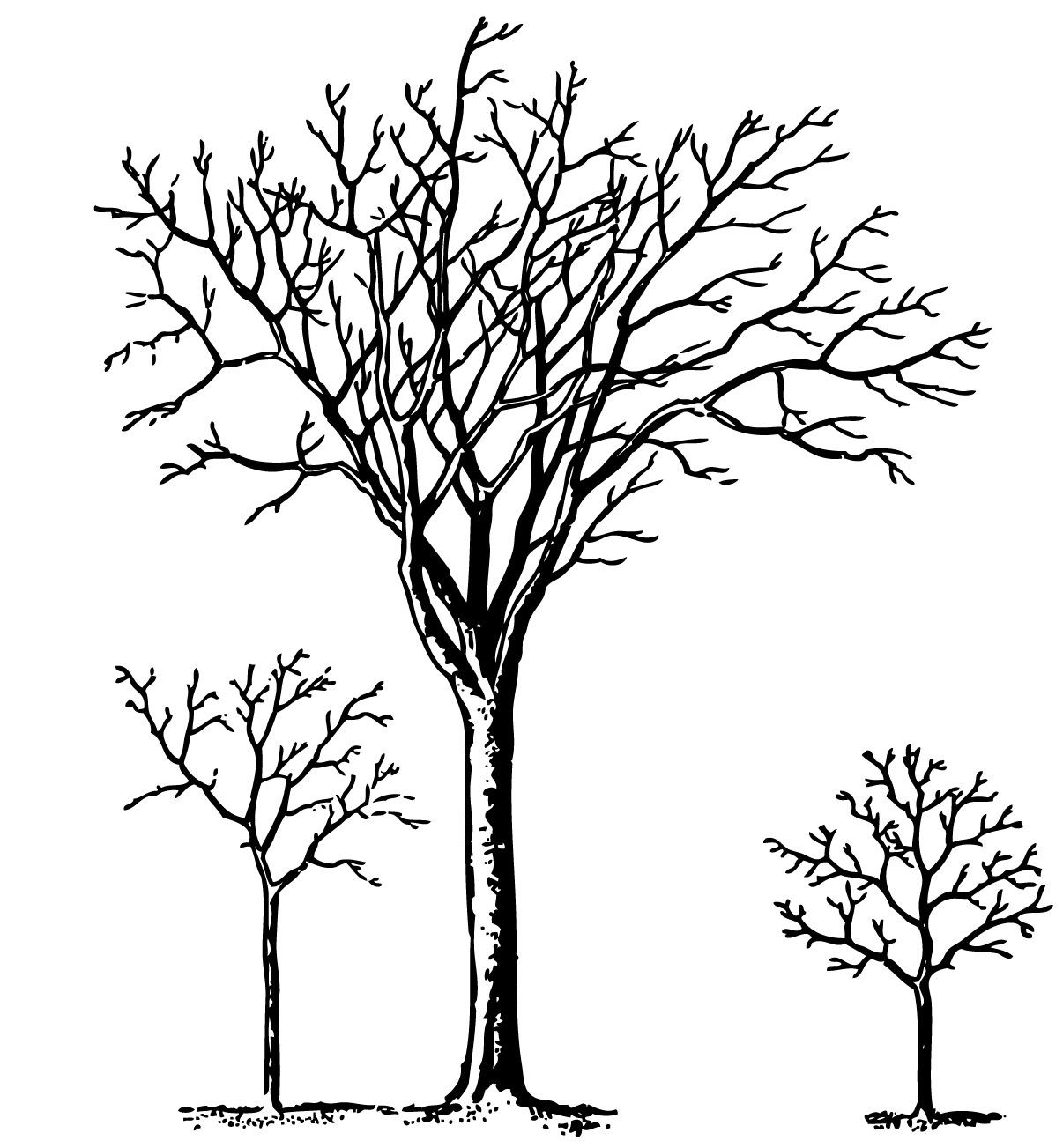 Winter tree canopy clipart png library library Vintage Halloween Clip Art - Spooky Trees | Formal ... png library library