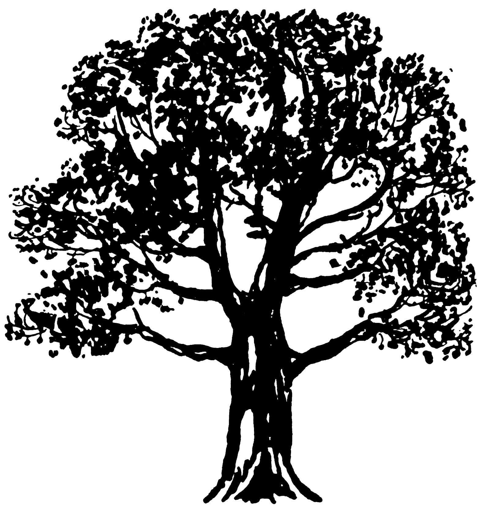 Wispy tree clipart jpg freeuse stock 32 Tree Clipart - Tree Images Free! - The Graphics Fairy jpg freeuse stock