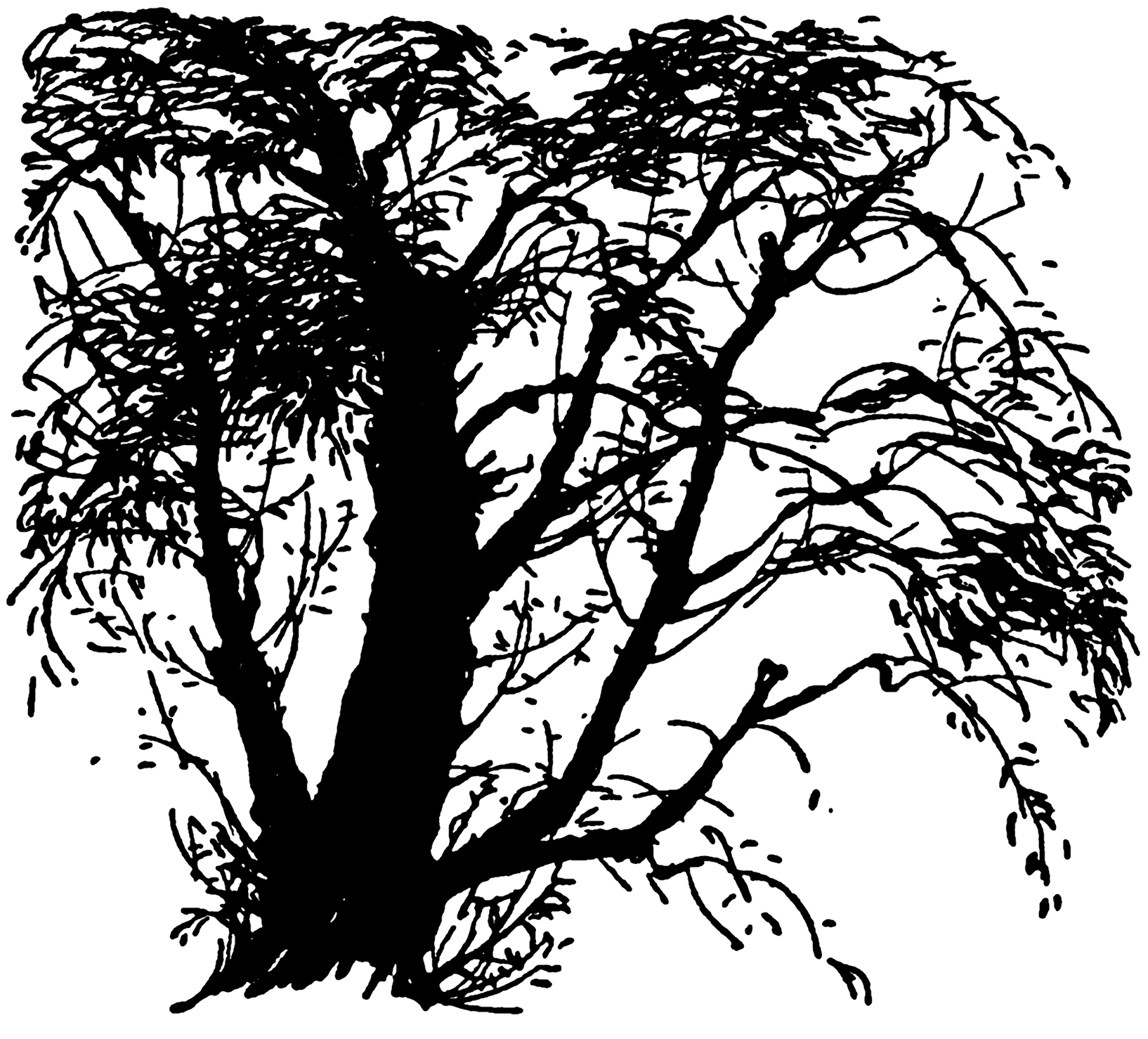 Wispy tree clipart jpg transparent 32 Tree Clipart - Tree Images Free! - The Graphics Fairy jpg transparent