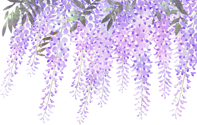 Wisteria lavender hydrangea clipart image freeuse Download Wisteria Flower Purple Lavender Painted Flowers ... image freeuse
