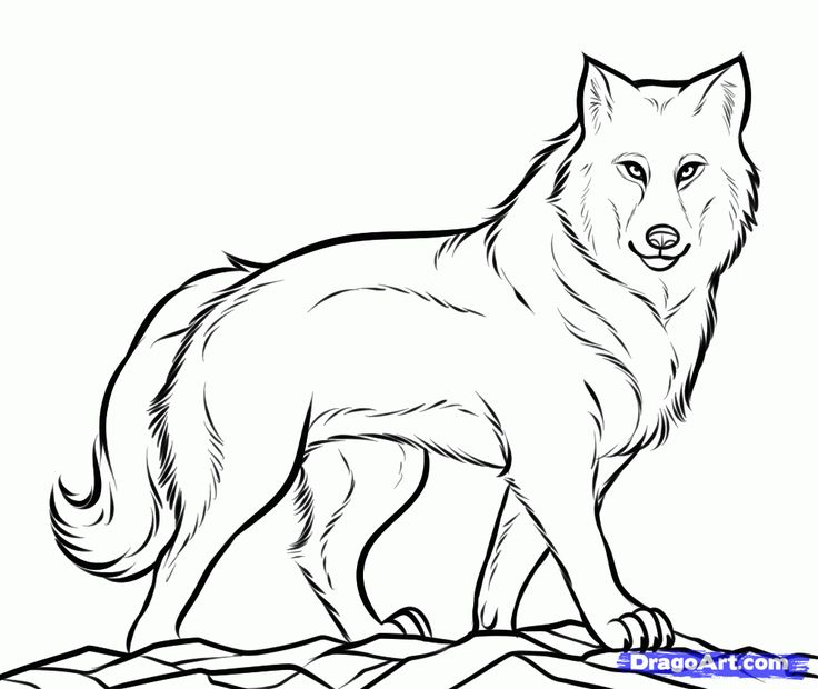 Wolf clipart black and white jpg library library Wolf Clipart Black And White | Free download best Wolf ... jpg library library
