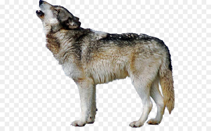 Wolf dog clipart picture download Wolf Cartoon clipart - Dog, Wolf, transparent clip art picture download