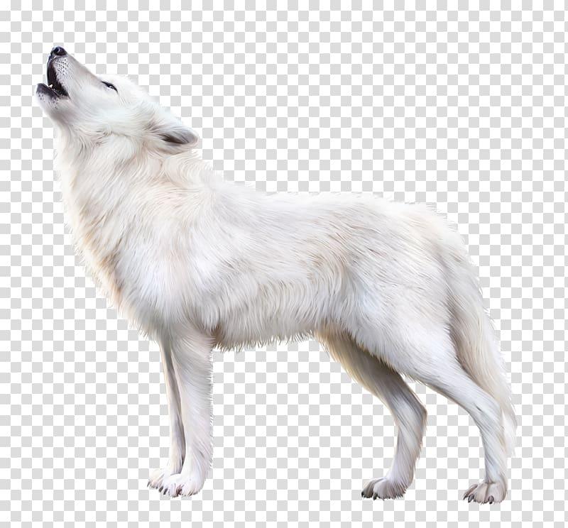 Wolf dog clipart transparent stock Howling white fox illustration, Arctic fox Alaskan tundra ... transparent stock