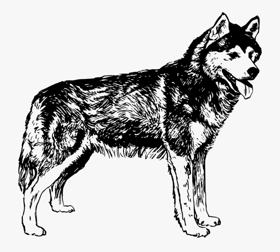 Wolf dog clipart transparent graphic library download Husky Transparent Dog Clipart - Husky Black And White Png ... graphic library download