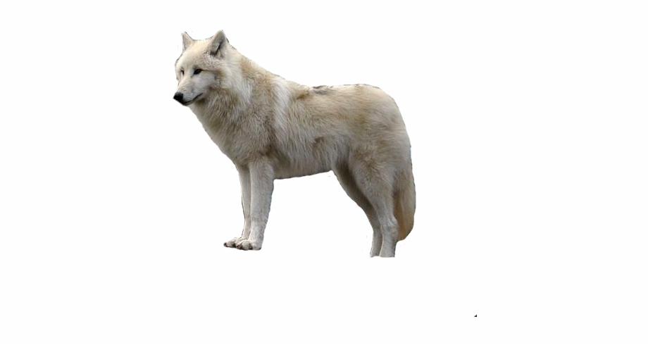 Wolf dog clipart transparent black and white library Gray Wolf Clipart Jumping - Arctic Wolf White Background ... black and white library
