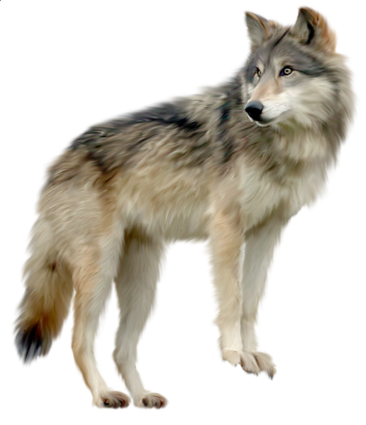 Wolf images clipart image free download Wolf Clipart | Kurtlar | Wolf clipart, Animals, Animal drawings image free download