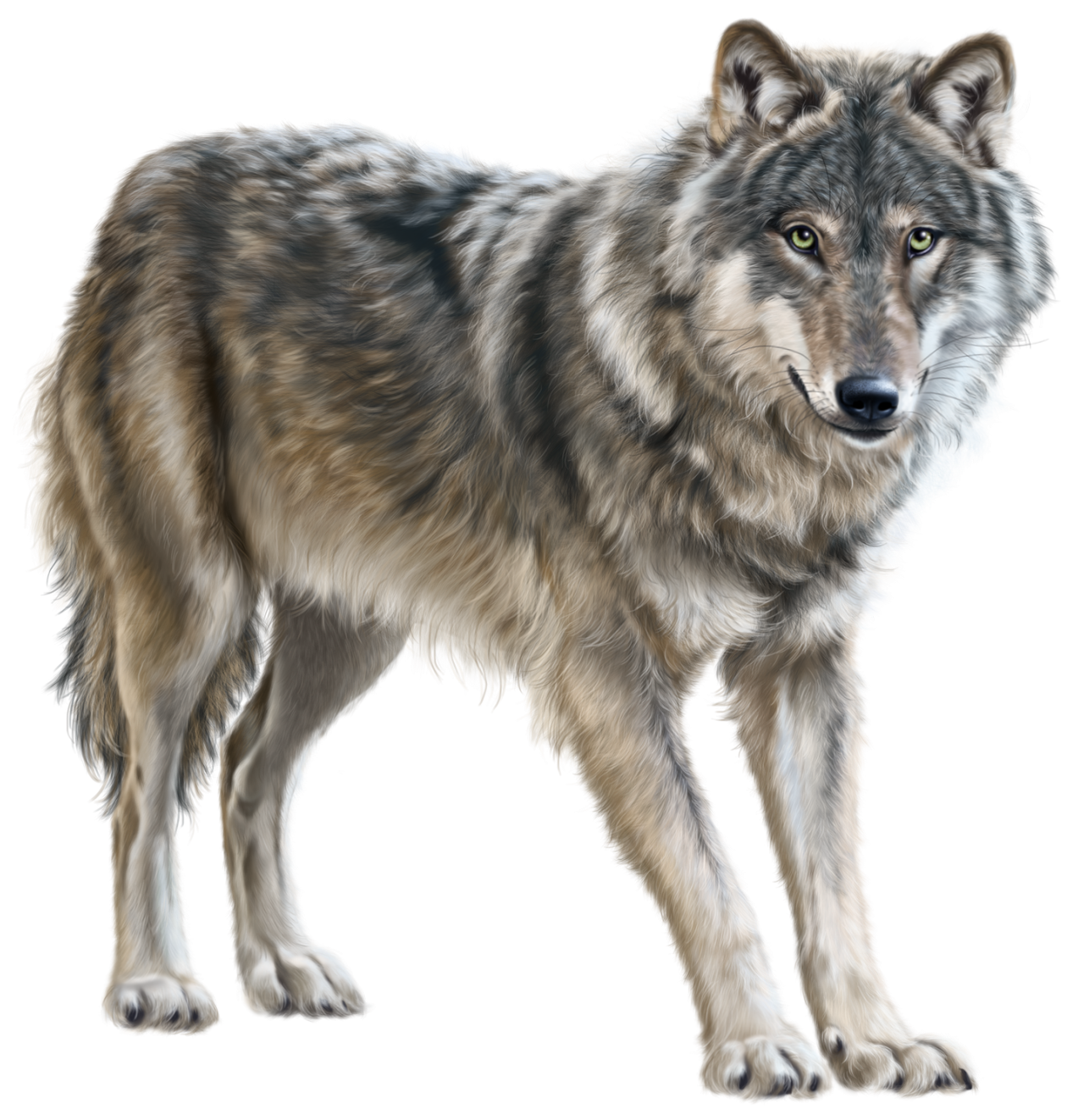 Wolf images clipart image transparent Wolf PNG Clip Art - Best WEB Clipart image transparent